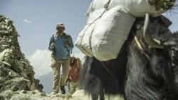 Phurba Tashi with a yak
